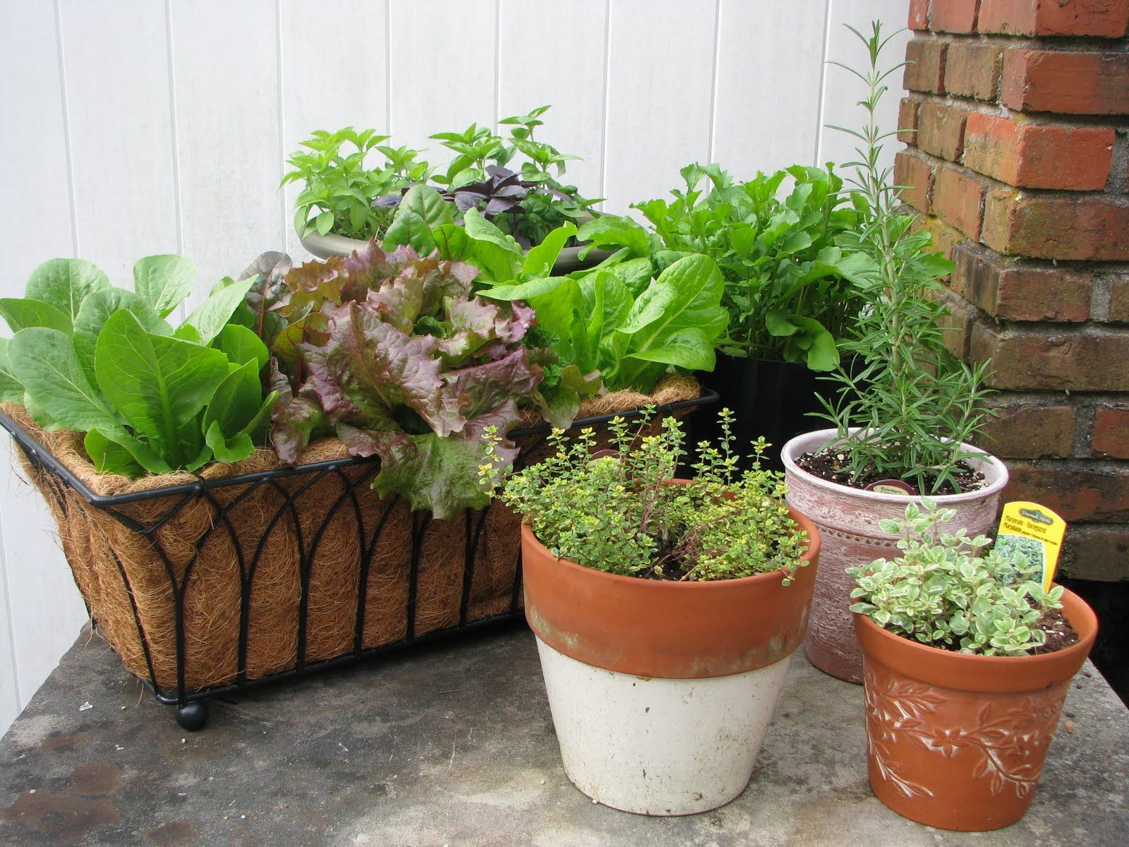 Desperate Gardener: Easy Container Gardening: Combining Herbs And Vegetables