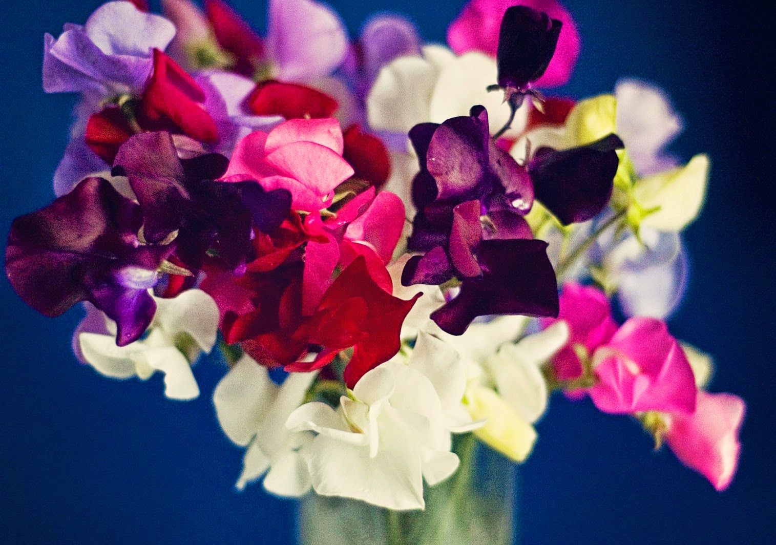 In and Out of the Garden April birth flower, Birth