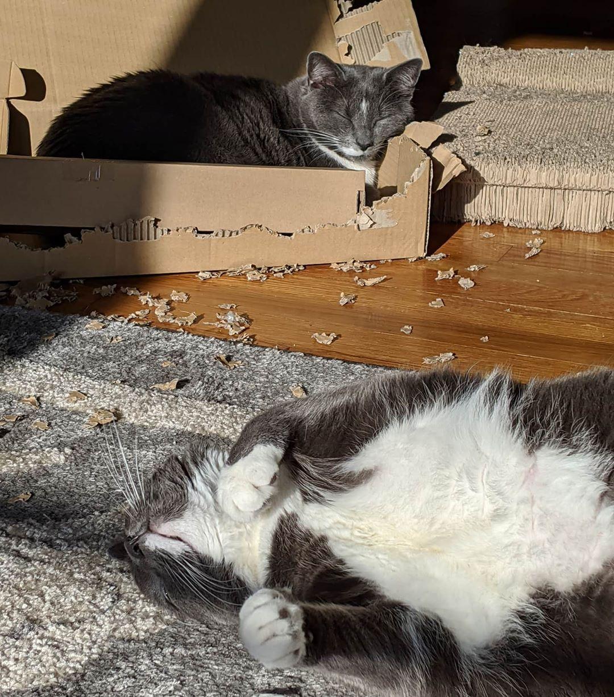 Boy We Re Pooped Cardboard Demo Is So Exhausting Cats Catsofinstagram Cat Of Catstagram Instagram Catlover I In 2020 With Images Pet Kitten Kitten Meowing Kittens