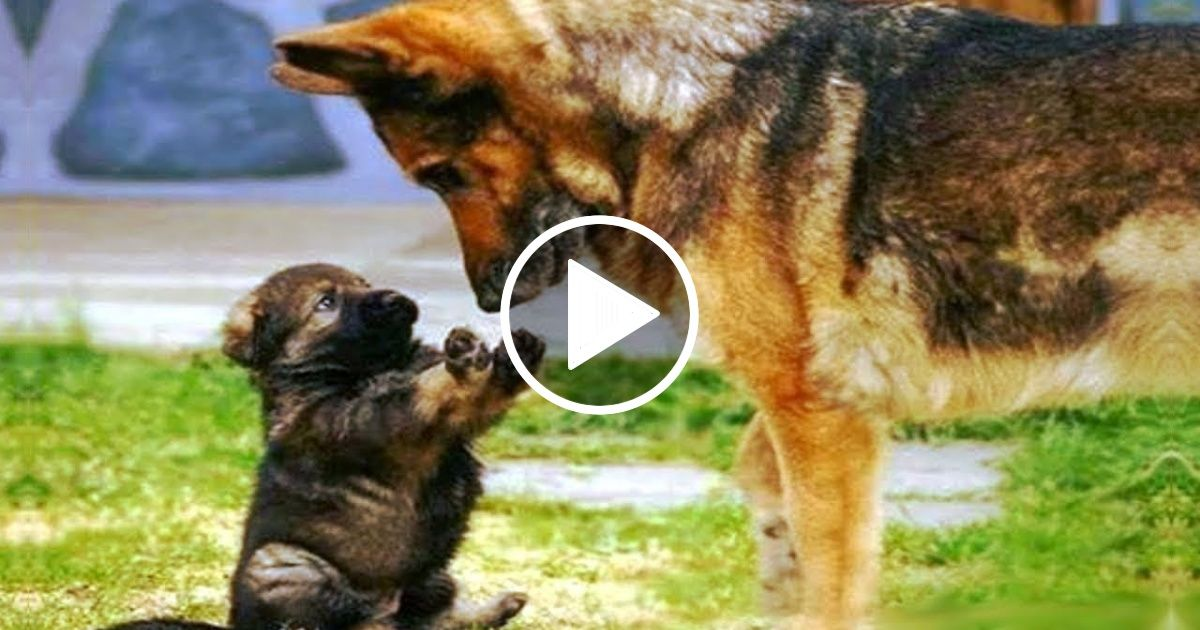 Cute Dogs And Cats Doing Funny Things 2018 5 Funny Cat And