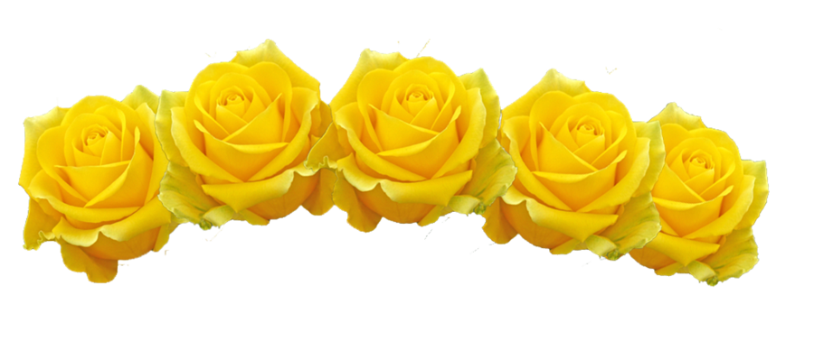 Yellow Rose Roses Flower Crown Pretty Style Mood Summer Aes Transparent Filler Moodboard Niche Aesthetic Over Yellow Flower Crown Transparent Flowers Crown Png