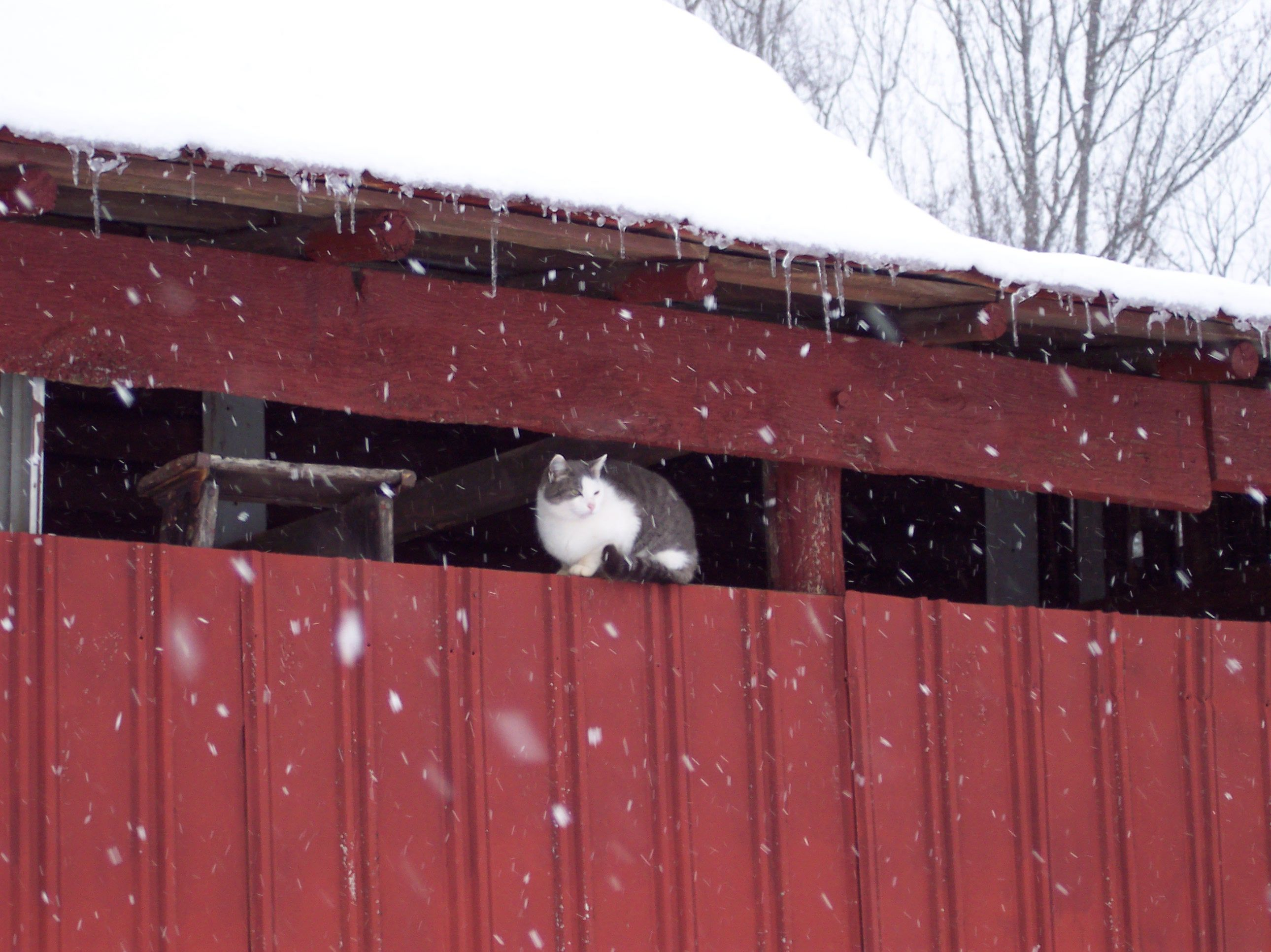 Cat seeking shelter from the snow Cat sleeping, Cats