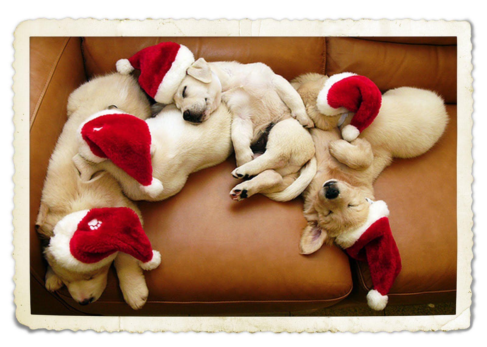 sleeping+dogs+via+tumblr.jpg (1600×1143)