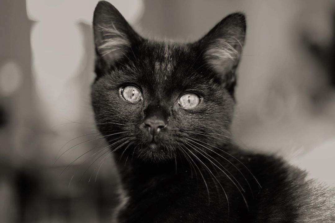 Kittens Luna Buzz Space Cats Blackcat London Swlondon Fujifilm Xt3 Xf16mmf14wr Photooftheday Science Eye Kittens Cat S Black Cat