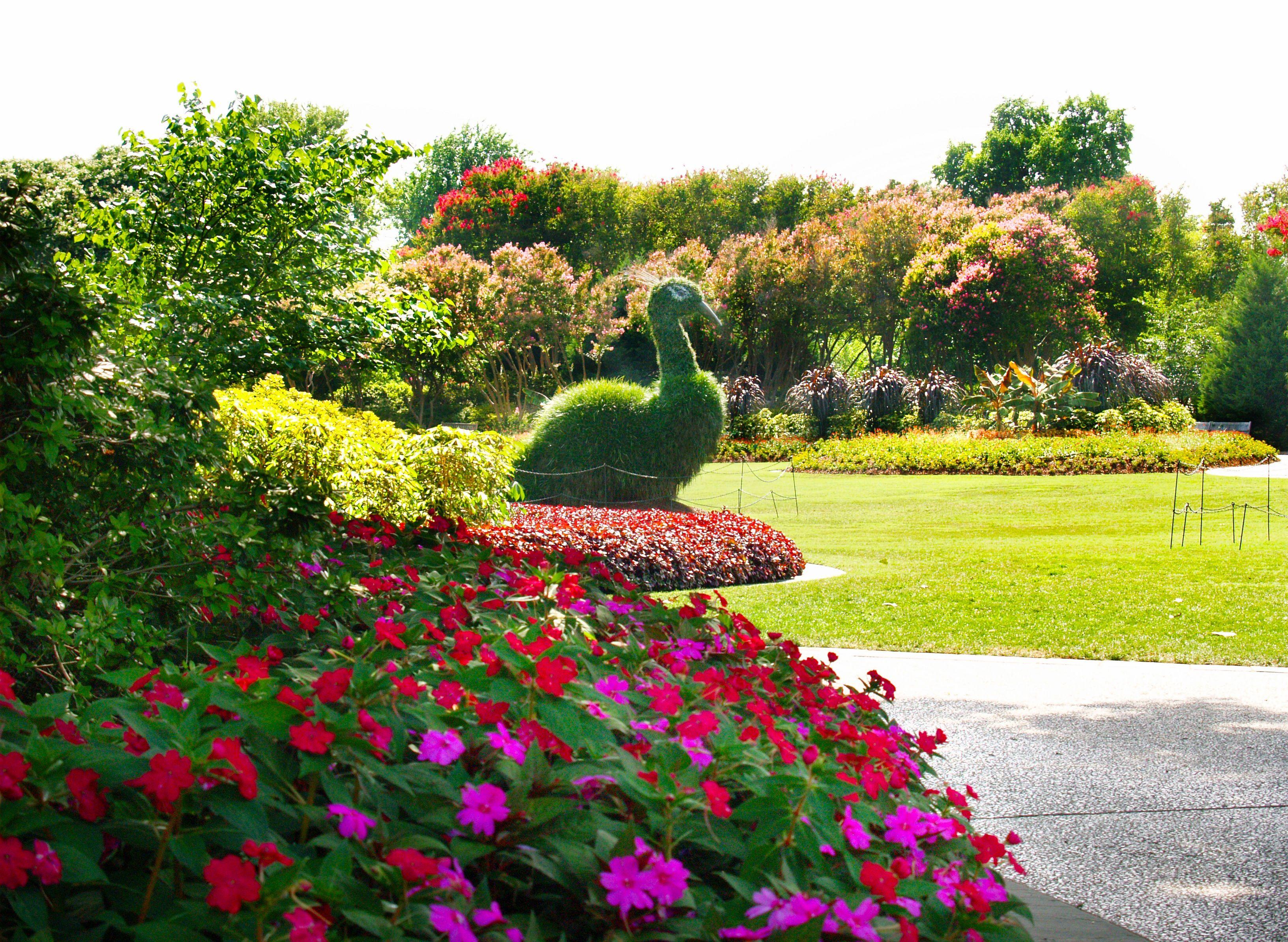 68 best summer in the garden images on pinterest | dallas