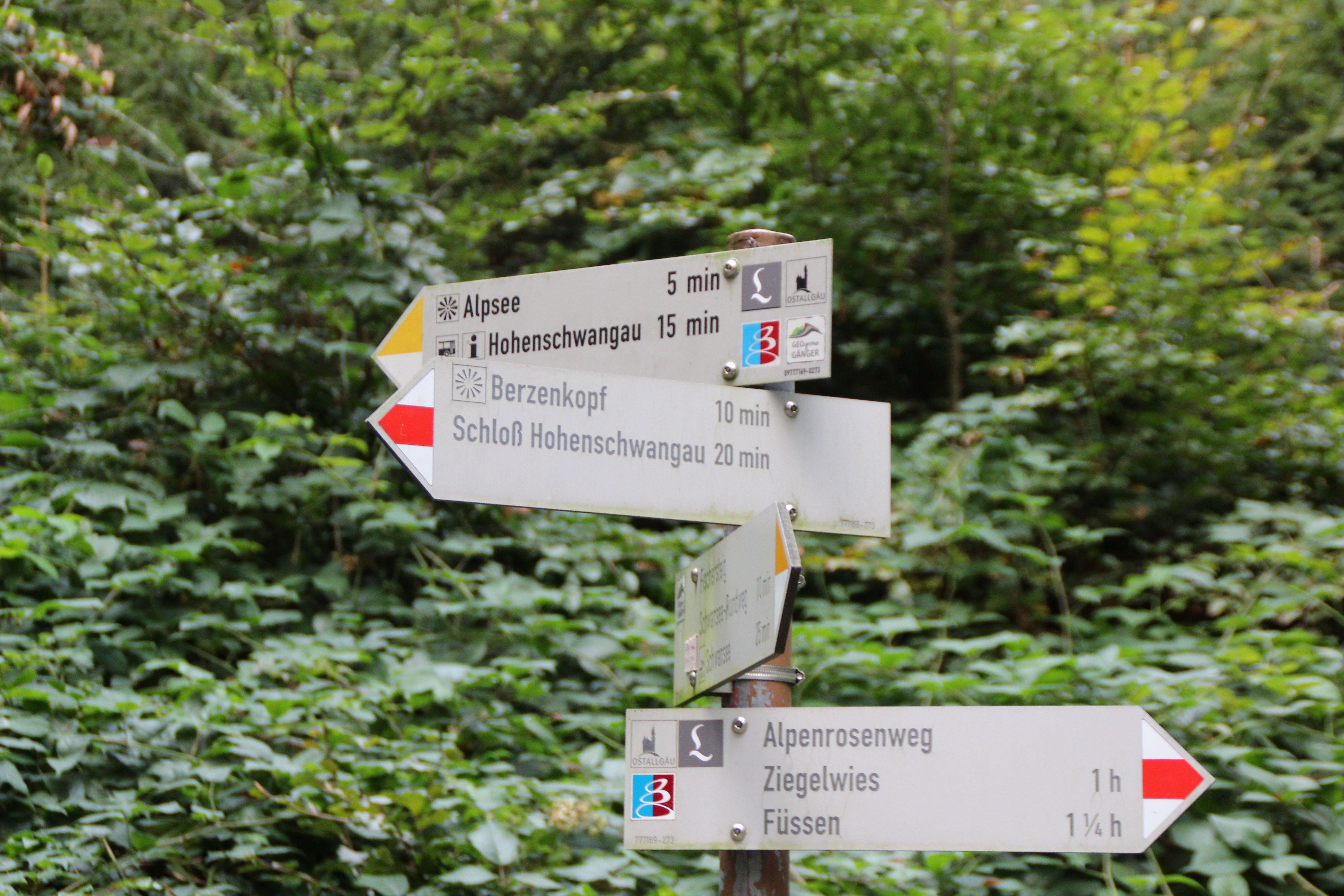 Der Alpenrosenweg Ist Ein Leichter Hohenweg Zwischen Fussen Und Hohenschwangau Auf Dem Einen Wunderschone Ausblicke Auf Zahlr Alpen Neuschwanstein Hohenweg