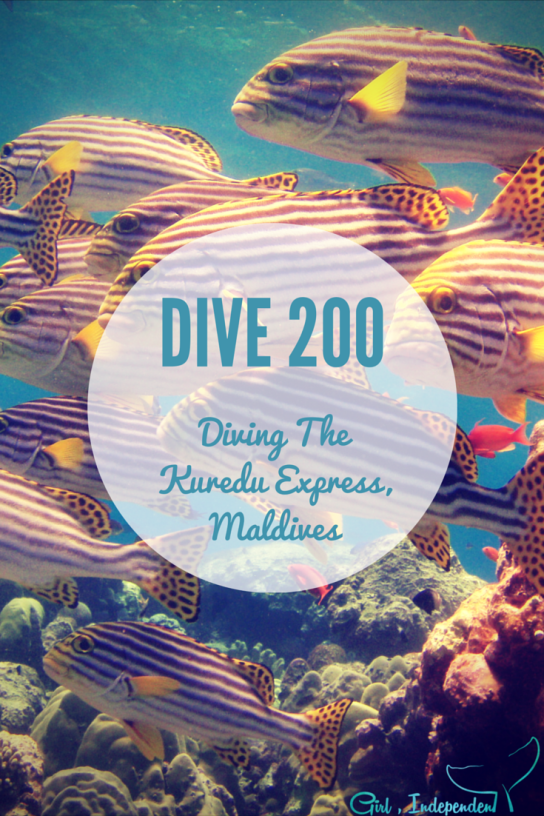One of my favourite of my 200 dives - The Kuredu Express, Maldives. It lives up to its name!