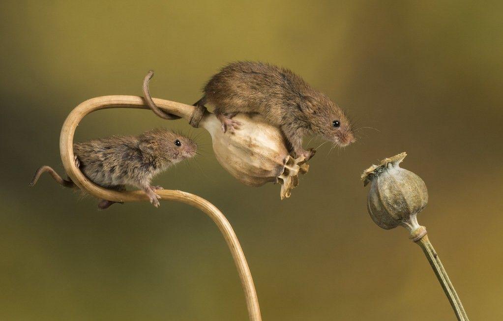 Pin von hewwo????? auf cute tiny mices Tiere, Lustige tiere