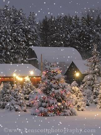 Gif * Pretty snow scene❄❄❄ - Christmas Tree Farm Open! Wintery Pinterest Christmas
