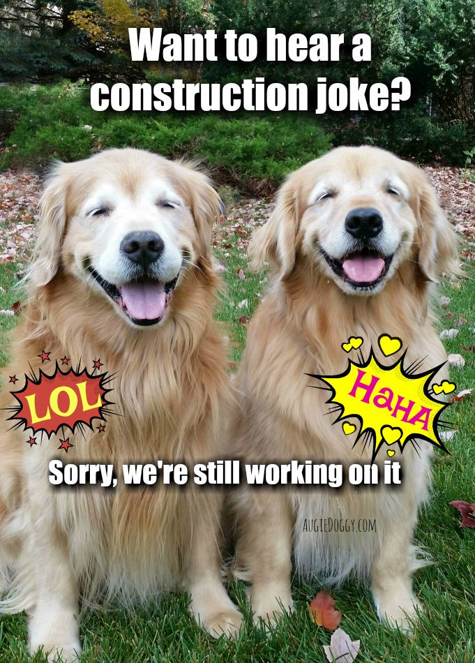 Funny Golden Retriever Construction Joke Meme Postcard Zazzle
