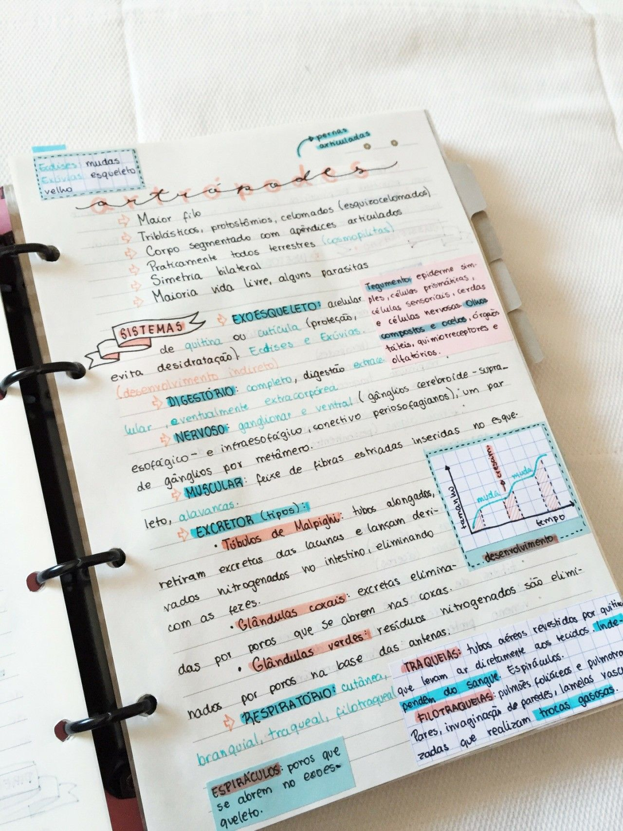 Decorar Apuntes Taking Notes Is One Of My Favorite Things To Do When It