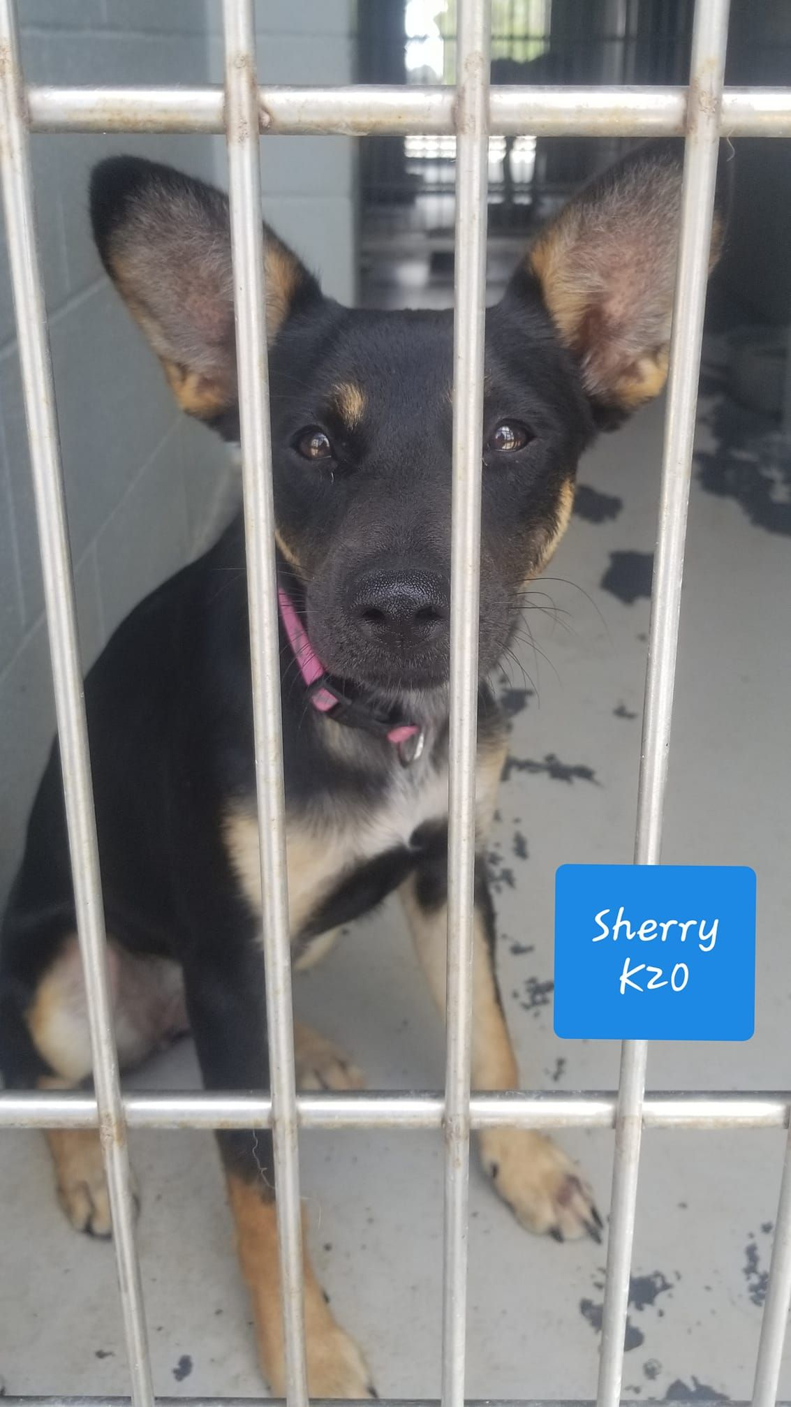 A Texas Dog In A Kill Shelter Please Pray Share On Facebook