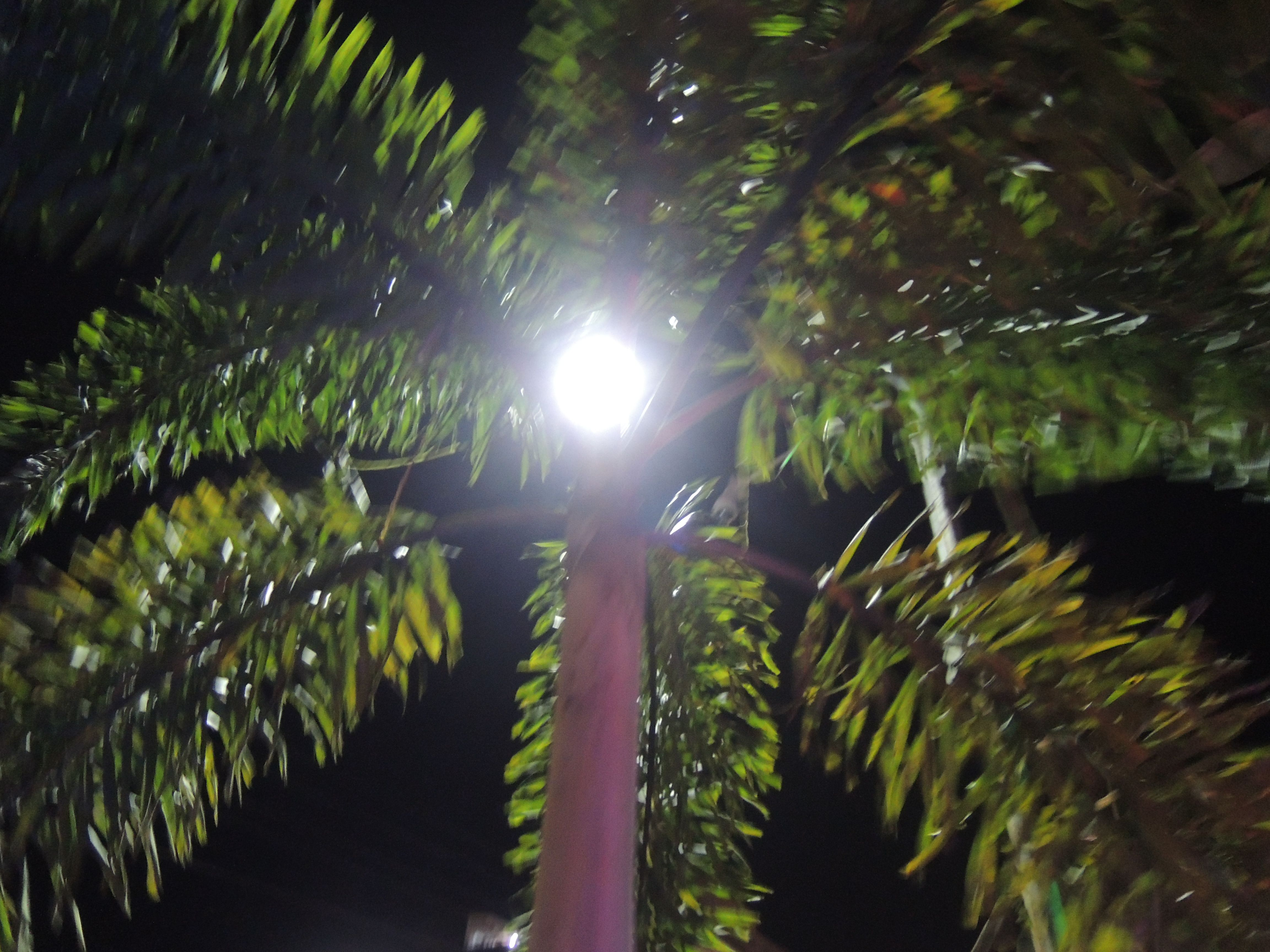 Lighting your path at night. Plant near a lamp post
