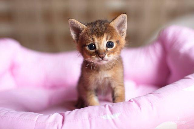 Miau Mit Bildern Baby Katzen Tiere Katzenbabys
