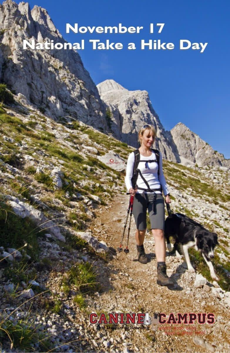 35 Best Dog Friendly Hiking Trails In Colorado Springs Dog Friends Best Dogs Dogs