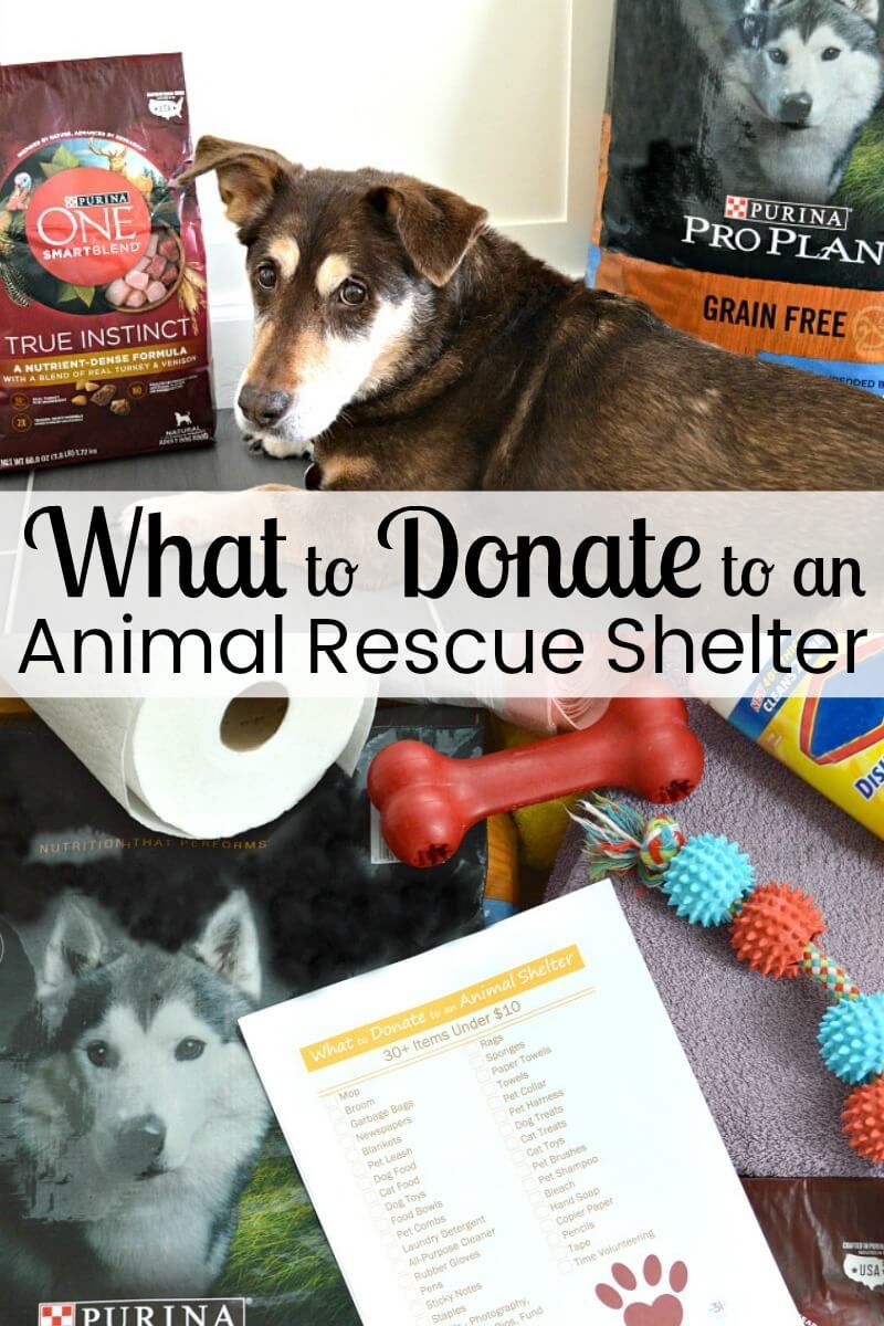 What To Donate To An Animal Rescue Shelter Animal Shelter