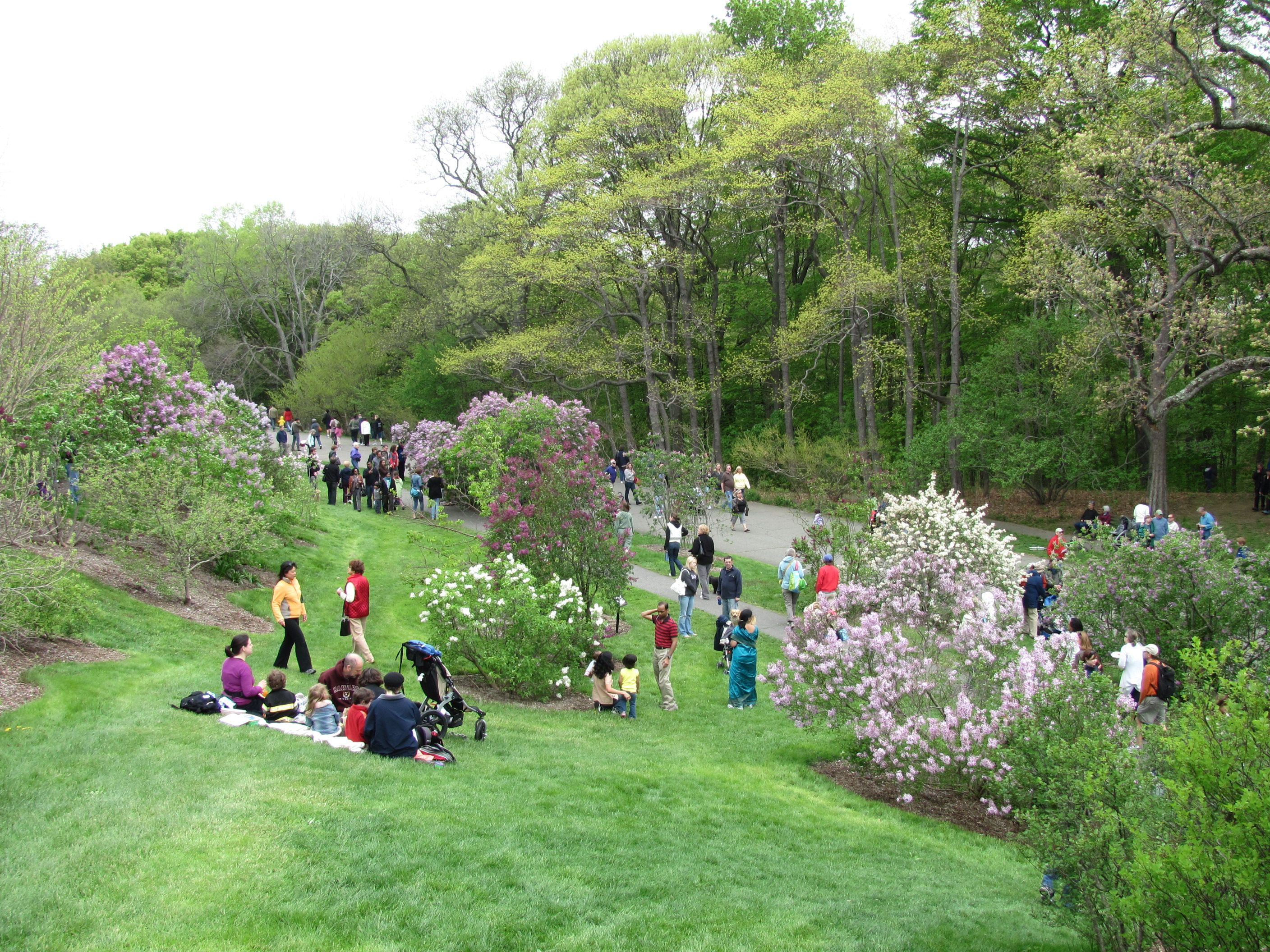 The Arnold Arboretum Owned by Harvard University but located in
