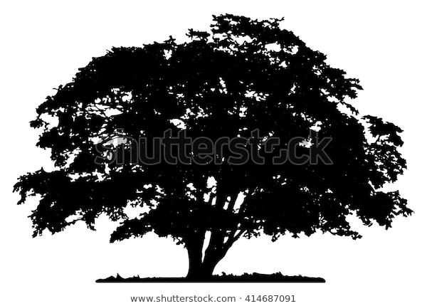 Tree Silhouette On White Background Stock Vector Royalty Free 414687091 In 2020 Oak Tree Silhouette Tree Silhouette Tree Art
