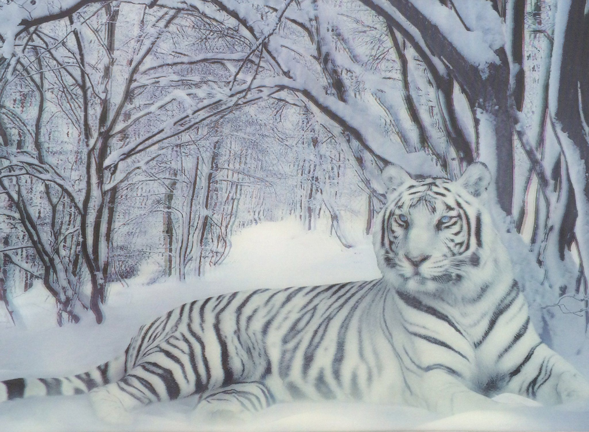 3d Picture White Tiger Lounging Pet Tiger Tiger Pictures Snow Tiger