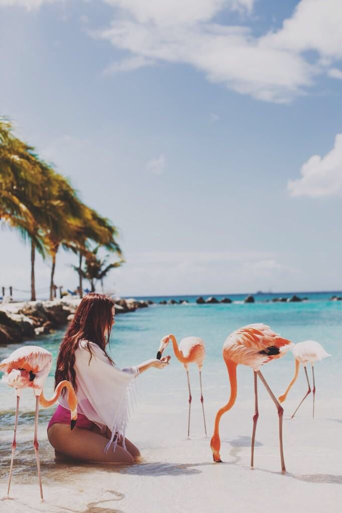 Aly You Can Feed Flamingos In Aruba Now I Want To Goto