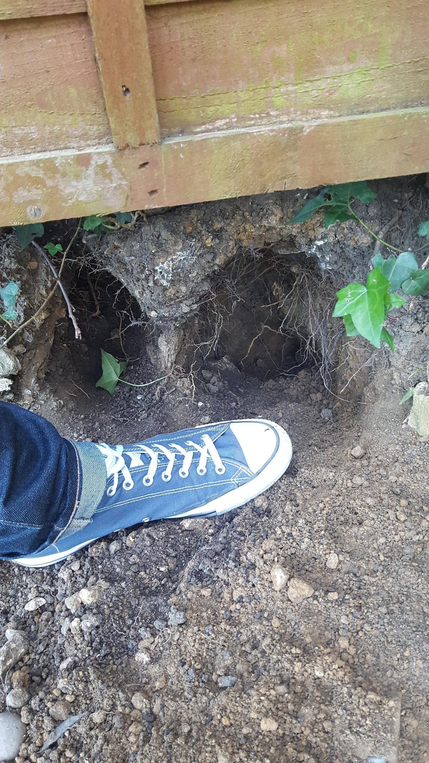 are these fox or rat holes london uk gardening garden diy