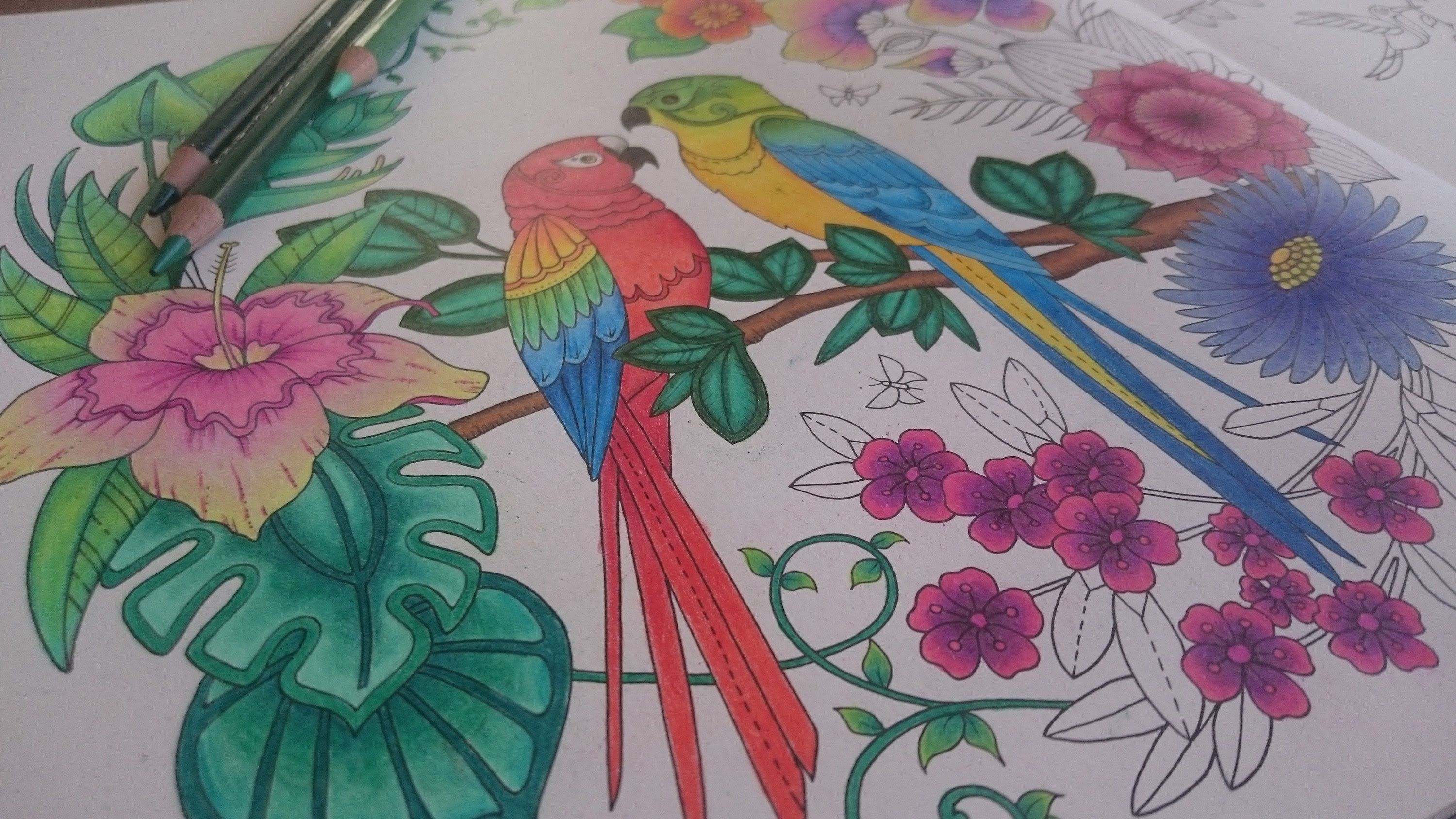 Coloring The Magical Jungle By Johanna Basford