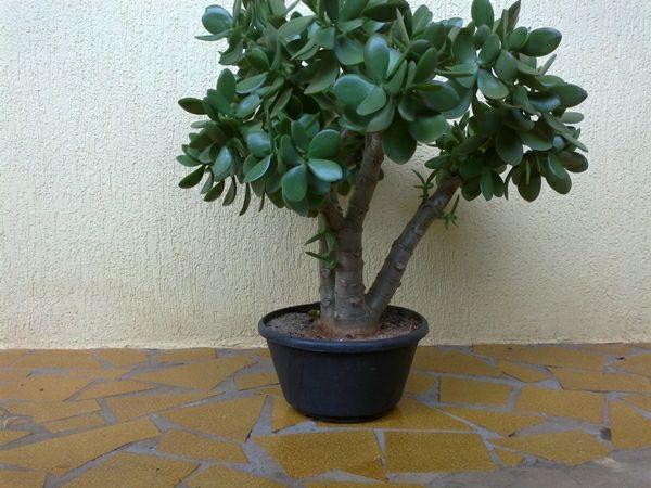 Pflegeleichte zimmerpflanzen tulpenbaum pflanzen garten terasse balkon - Pflegeleichte zimmerpflanzen mit bluten ...