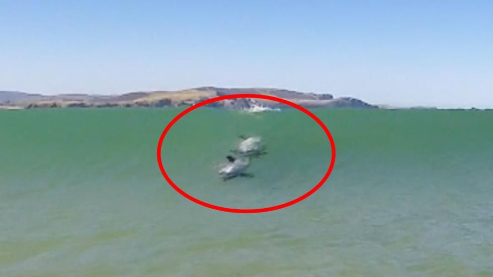 Two dolphins zip through the waves as a tourist takes thrilling video.
