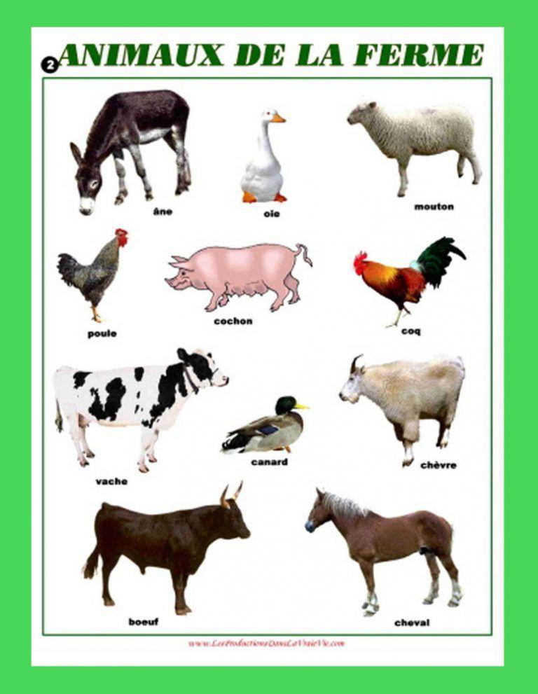 Imagier Animaux De La Ferme : imagier, animaux, ferme, Épinglé, Enseignement, Français