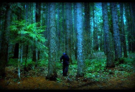 halloween creepy forest escape video walkthrough