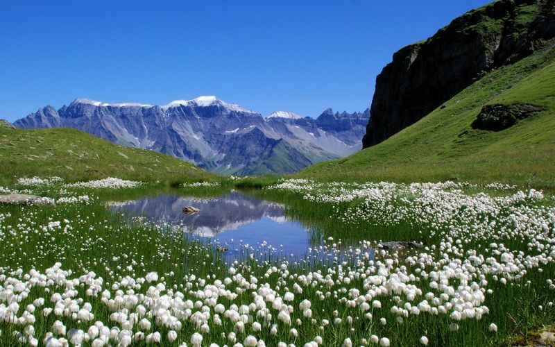 Mountain Flowers Switzerland 1782 Category Nature Hd Wallpapers Subcategory Flowers Hd Wallpape Beautiful Nature Spring Beautiful Nature Earth Pictures