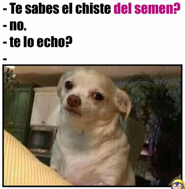 Chistes Malos Memes De Perros Chihuahua Memes Perros Memes De Animales Chistosos