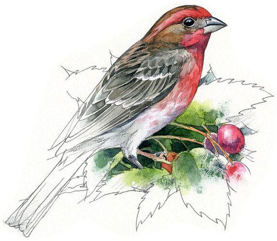 Female House Finch Painting Google Search In 2020 Bird Art Watercolor Bird Wildlife Art