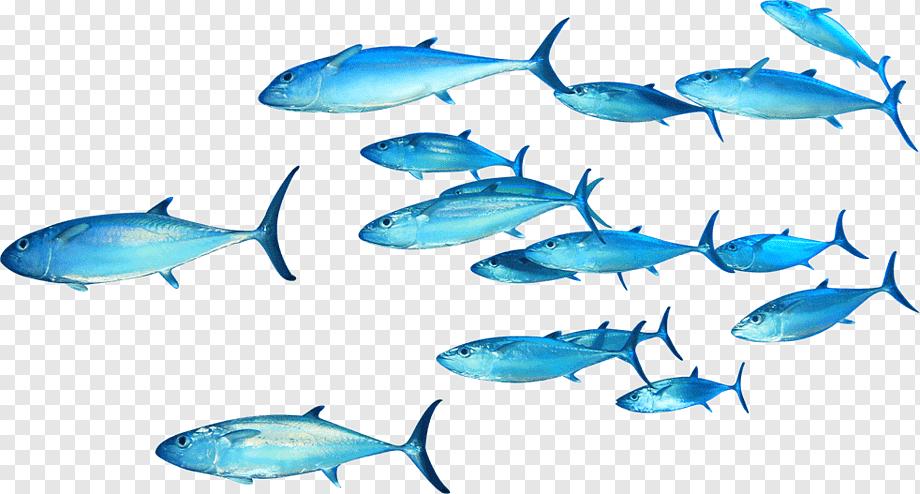 Pin By Y Xa On Cafe Fish Illustration Pelagic Fish Great White Shark Drawing