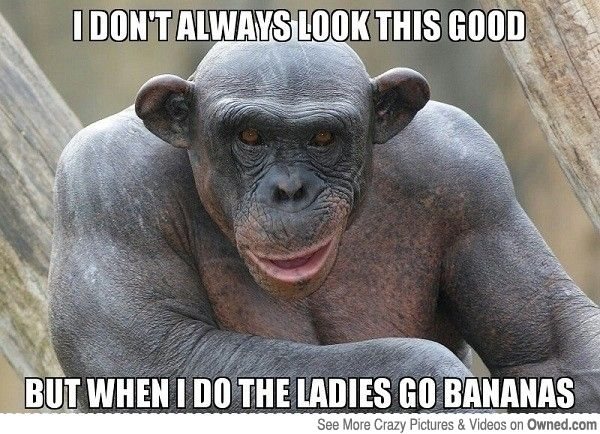 Funny Meme Joke Pics : Monkey memes funny google search charlotte s faves