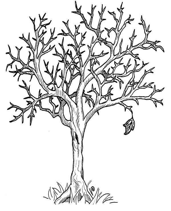 Autumn Tree Without Leaves In Fall Leaf Coloring Page Tree Coloring Page Leaf Coloring Page Fall Leaves Coloring Pages