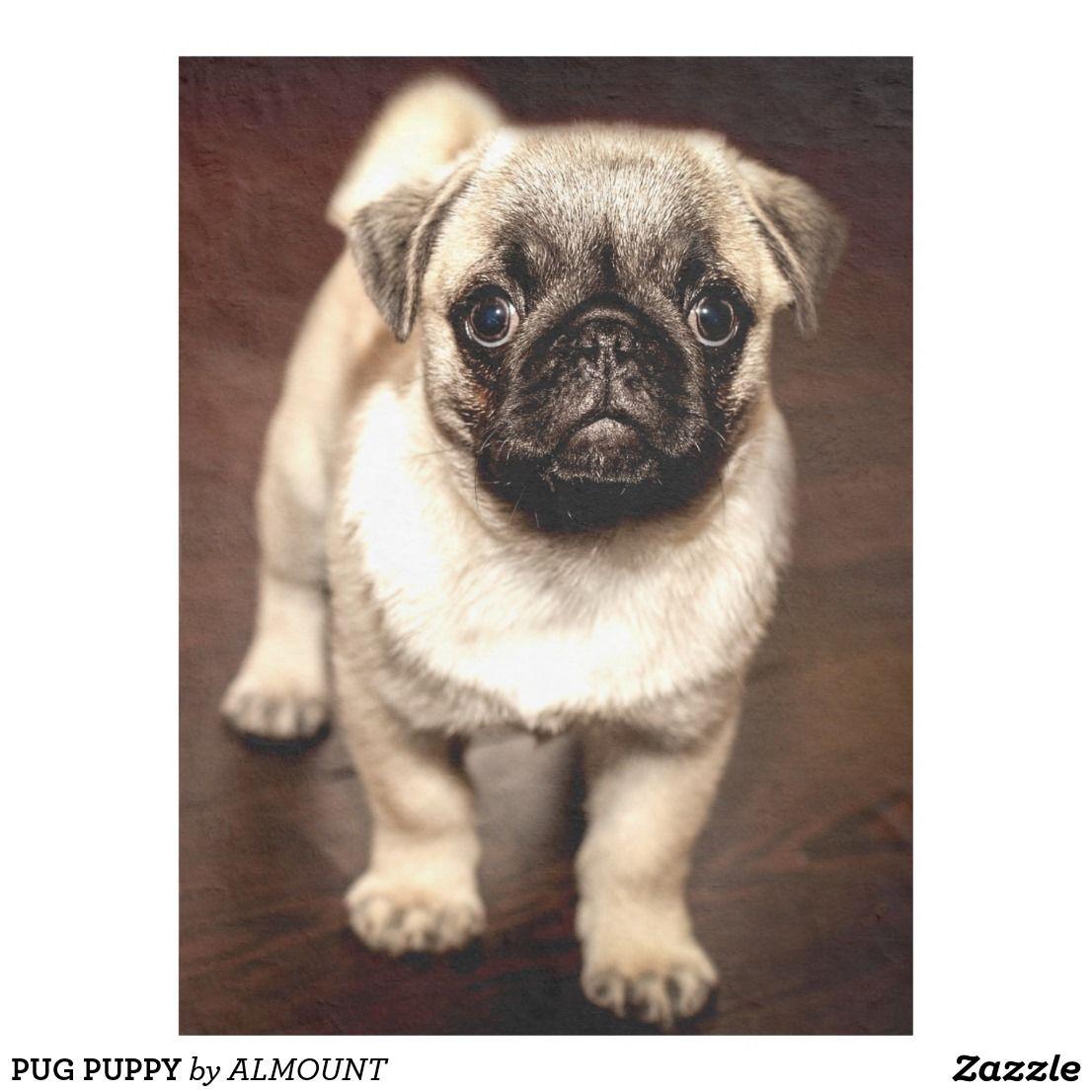 Pug Puppy Fleece Blanket Zazzle Com Cute Pug Puppies Puppy