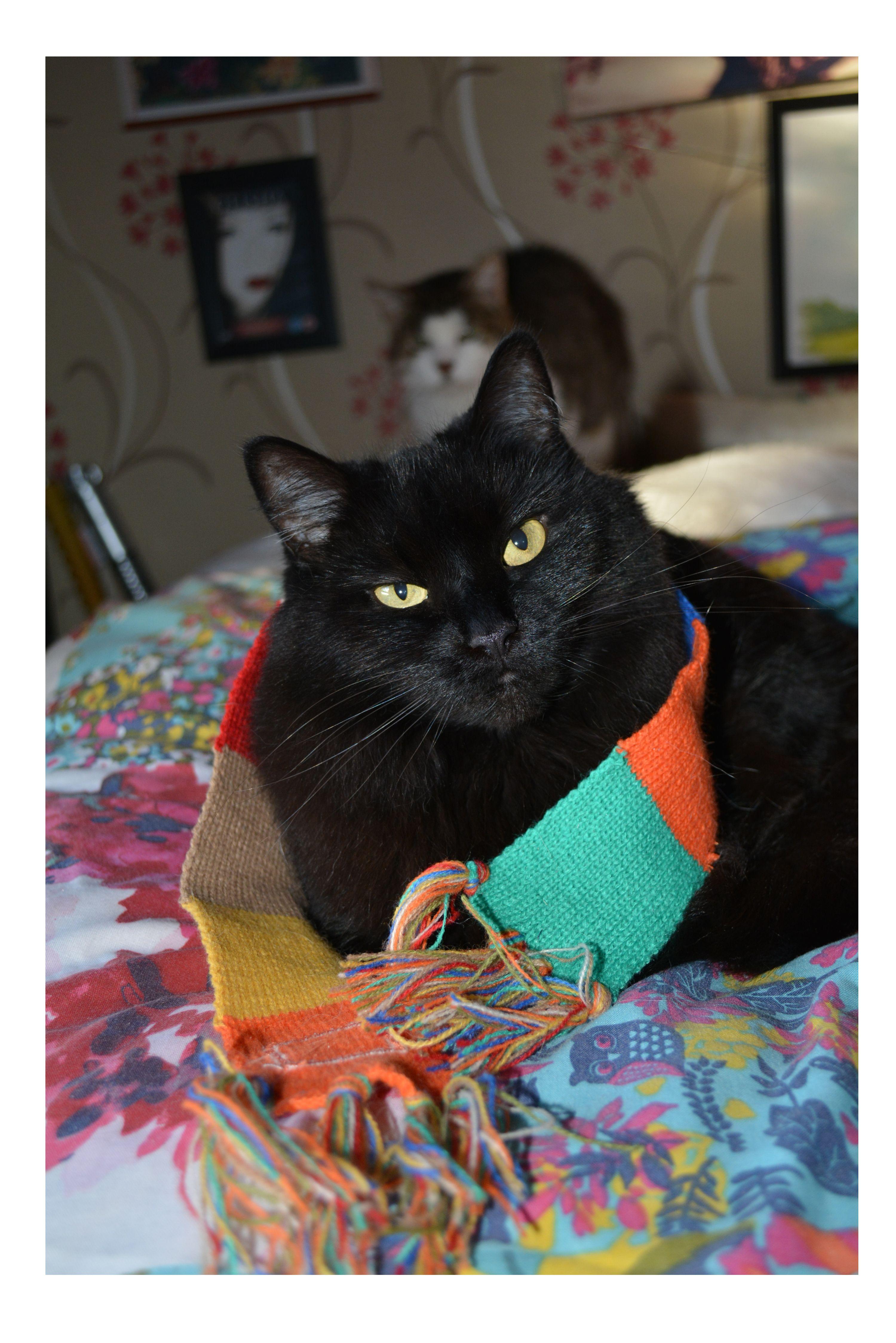 Sammy my Wife's Cat...wearing Bob the Cat Scarf Cat