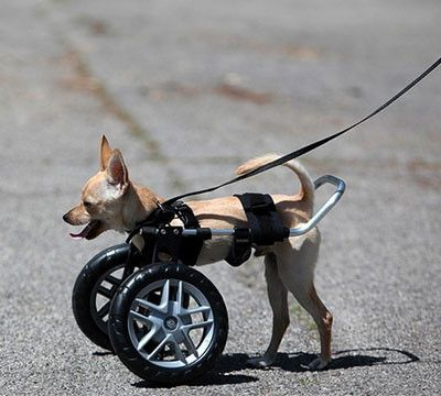 Front Support Wheelchair | Stuff to buy | Dog wheelchair