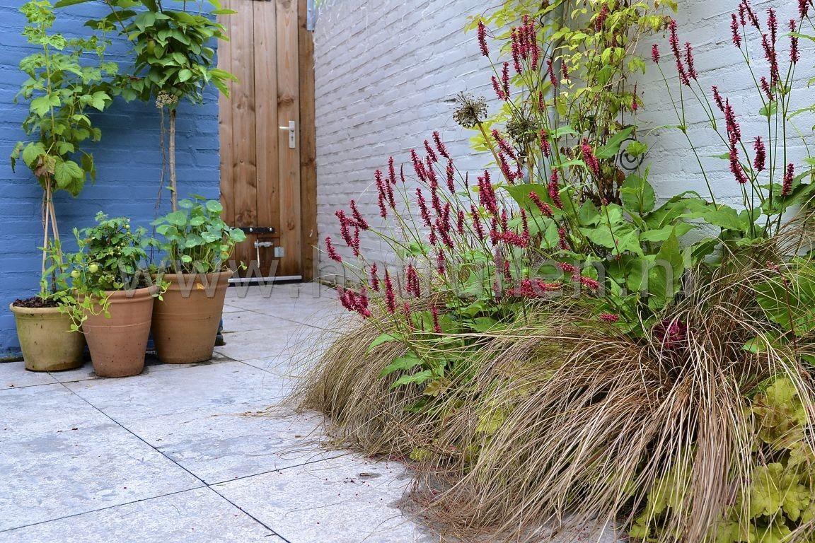 tuinontwerp tuinaanleg eindhoven nuenen patiotuin kleine ForTuinaanleg Nuenen