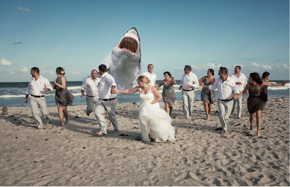 Dear Pinterest I See The Juric Park Wedding Photo And Raise You A Giant Great White Shark