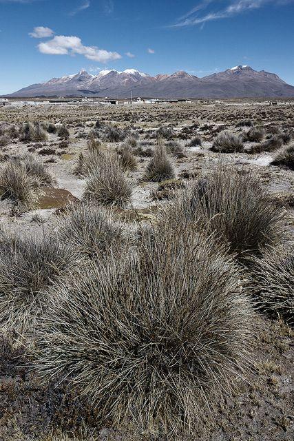 Andes. +3000 msnm. Perú