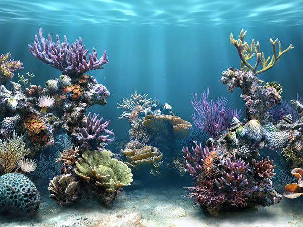 Fonds Pour Creations Page 4 Dessin Mer Recif Corallien Papier Photo