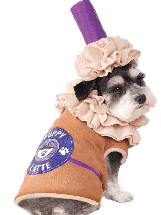 15 Incredible Dog Halloween Costumes You Can Get on Amazon -   19 diy Halloween Costumes cat ideas