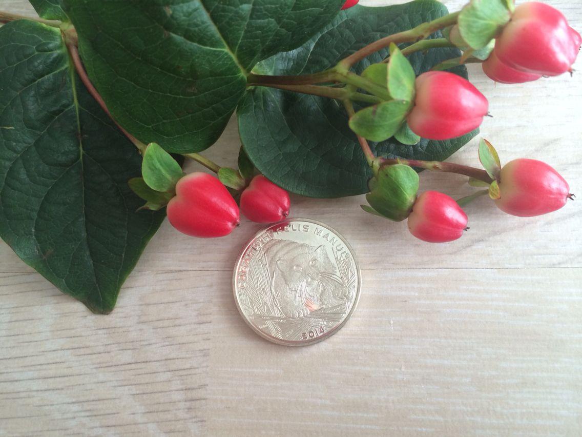 Филторг монеты иконка птичка