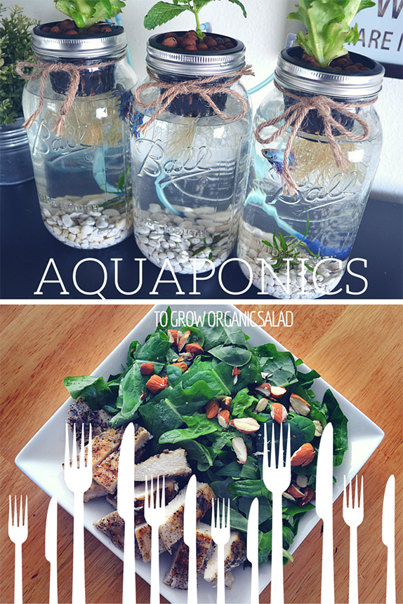Organic Indoor Herb Garden Kit 3 mason jar aquaponics kit build your own hydroponics herb garden organic salad made with mason jar aquaponics from green plur grow organic indoor herb garden salad garden using betta fish and no soil workwithnaturefo