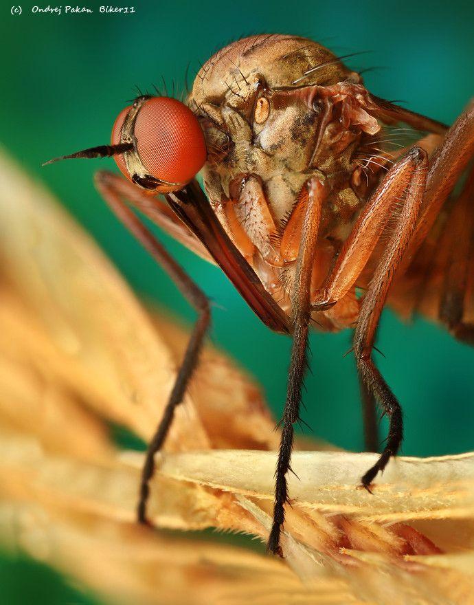 #nouse #macro #insect   #photography  #nature  Copyright  Ondrej Pakan