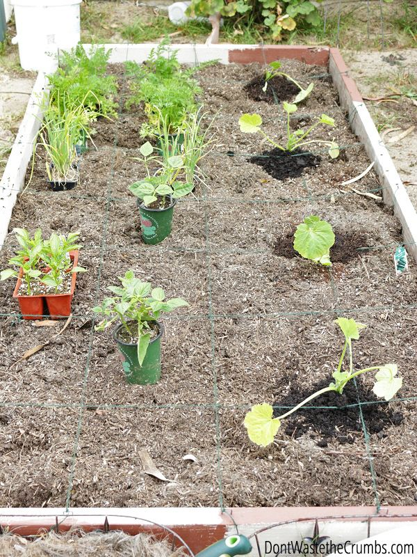 Urban Square Foot Gardening For Beginners Vegetable Garden For Beginners Square Foot Gardening Gardening For Beginners