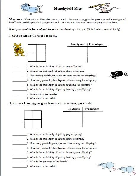 Probability And Genetics Worksheet: need an introductory geics worksheet biology pinterest ,