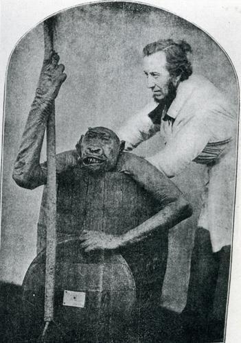 man & ape IV